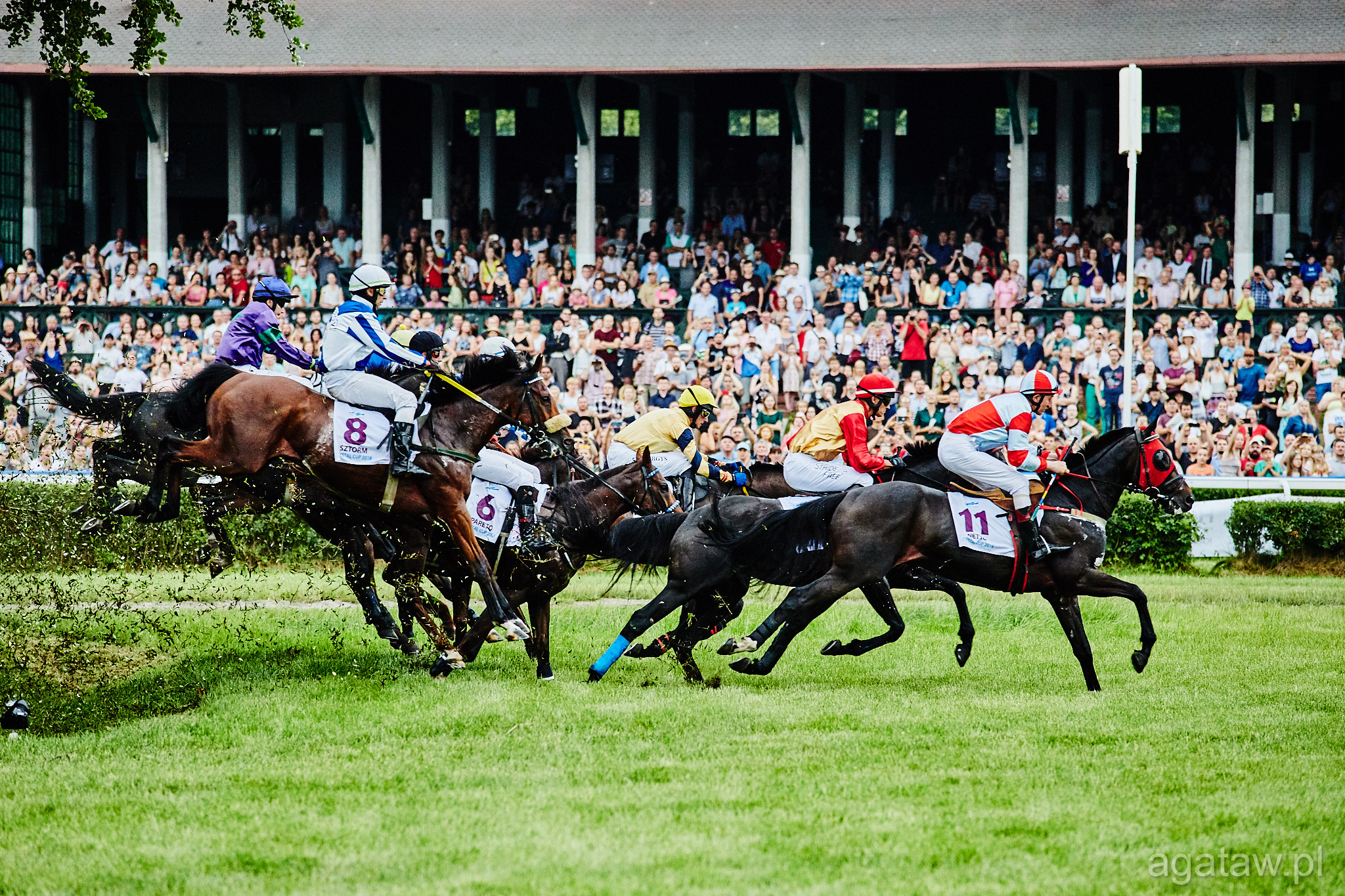 02/06/2019 // FESTIVAL OF FREEDOM & LADIES DAY (CRYSTAL CUP)